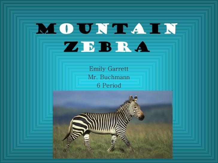 Mountain zebra powerpoint