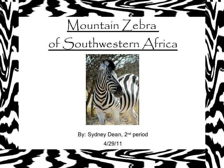 Mountain Zebra  of Southwestern Africa By: Sydney Dean, 2 nd  period 4/29/11