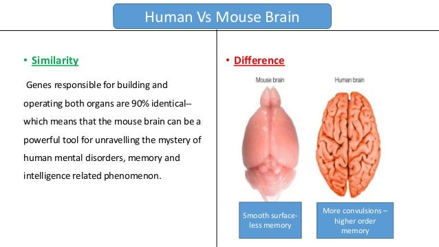 Mouse Model Pros Cons together with Anatomy Unit 4 Notes Bone Types Function The Skeleton besides The Inter  Of You How Wireless Medical Implants Will Change Medicine moreover Fim Da Injecao De Insulina Nova Droga Poderia Controlar A Diabetes Mensal Ou Anualmente in addition Hpa Axis. on brain insulin