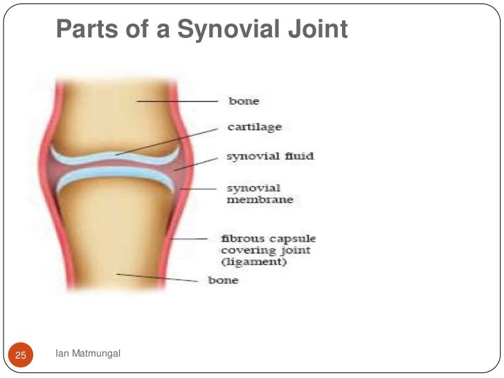 knee joint pain supplements