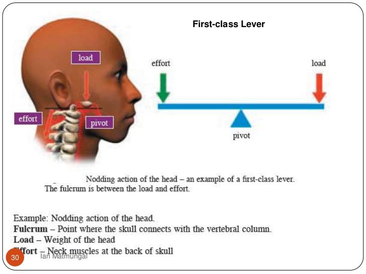 1st class levers