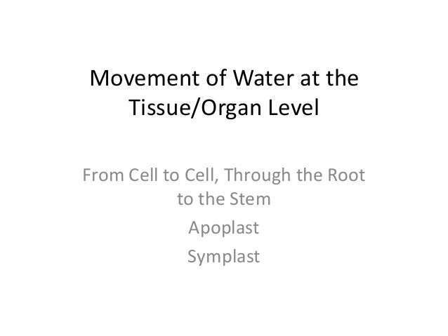 Movement of water at the tissue