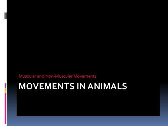 Muscular and Non-Muscular Movements  MOVEMENTS IN ANIMALS