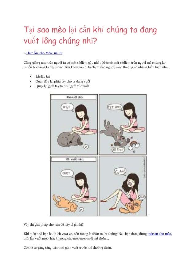 Mẹo vặt nuôi mèo để mèo không cào khi ta vuốt