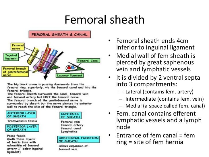 Images of Femoral Sheath - #SpaceHero