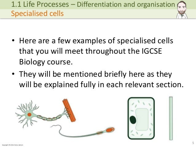 igcse biology coursework Example biology coursework - full sample coursework covering the basic mechanisms of homeostasis including full bibliography.