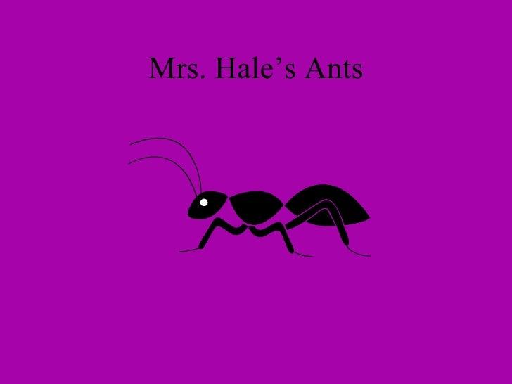 Mrs. Hale's Ants