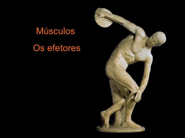 Músculos  Os efetores