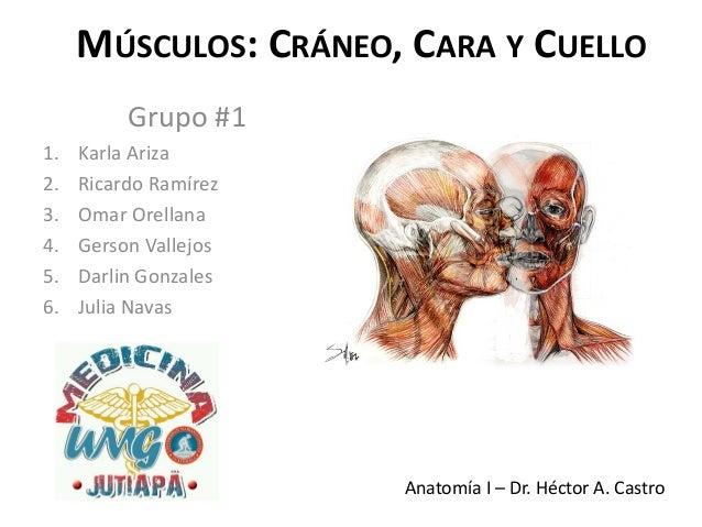 MÚSCULOS: CRÁNEO, CARA Y CUELLO          Grupo #11.   Karla Ariza2.   Ricardo Ramírez3.   Omar Orellana4.   Gerson Vallejo...
