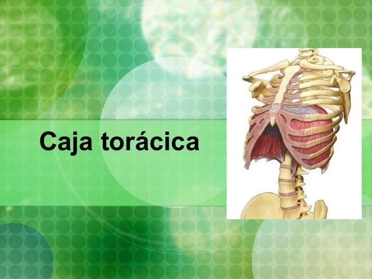 MúSculos De La Caja ToráCica Completo