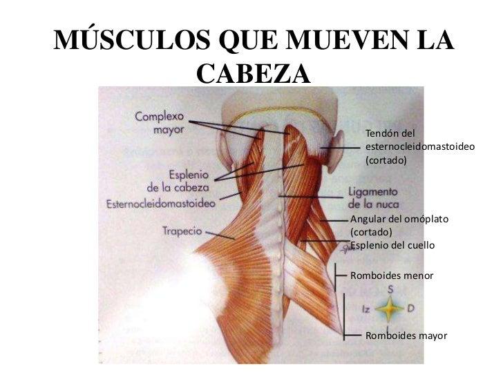 Que tal la osteocondrosis y cuáles sus causas