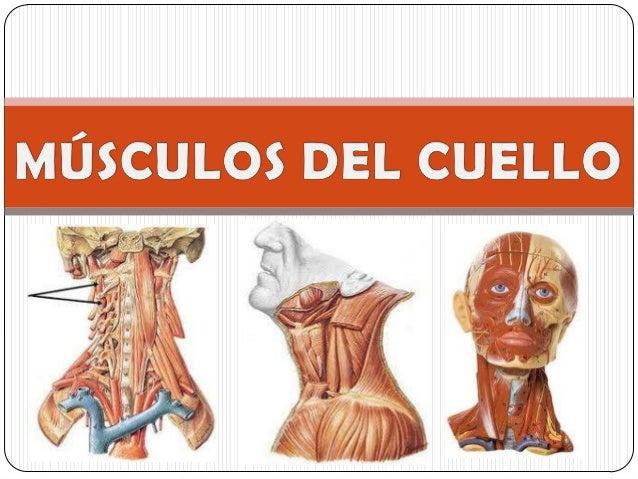 Duele la parte occipital de la cabeza y el cuello que hacer