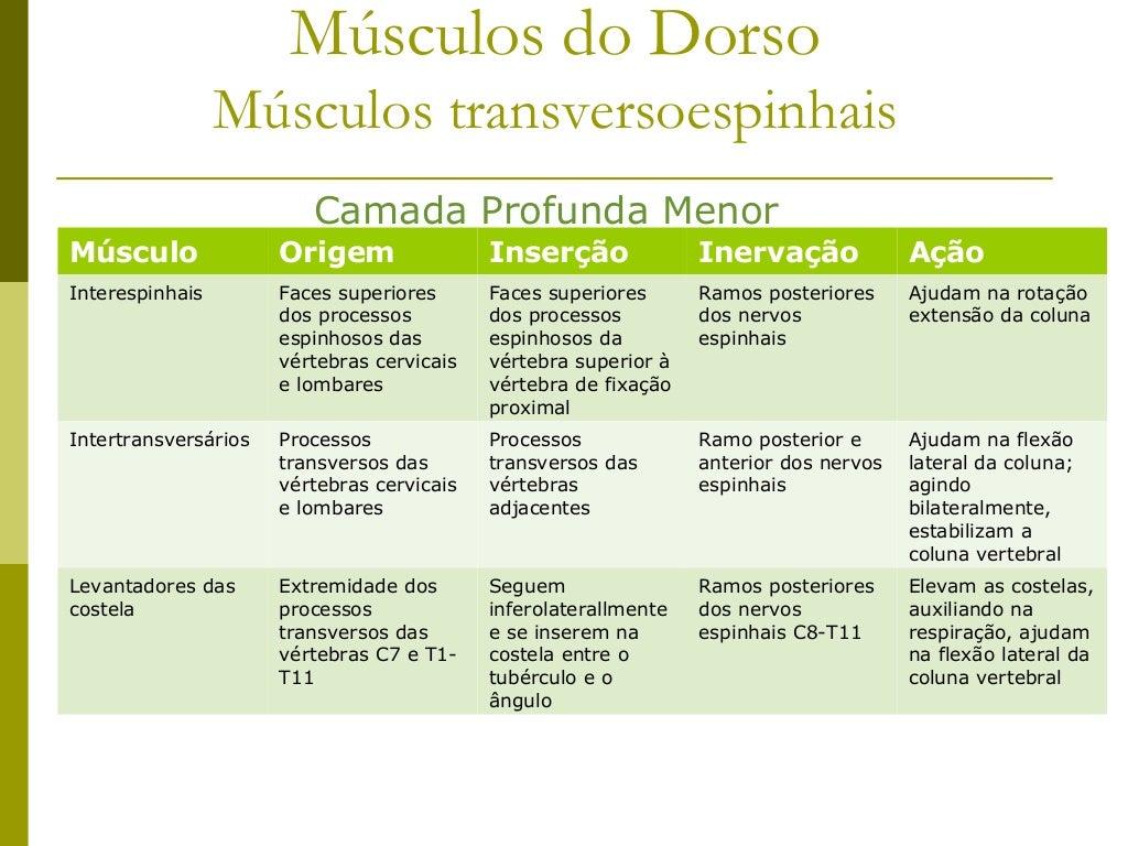 Músculos Esplênios e Transversocostais