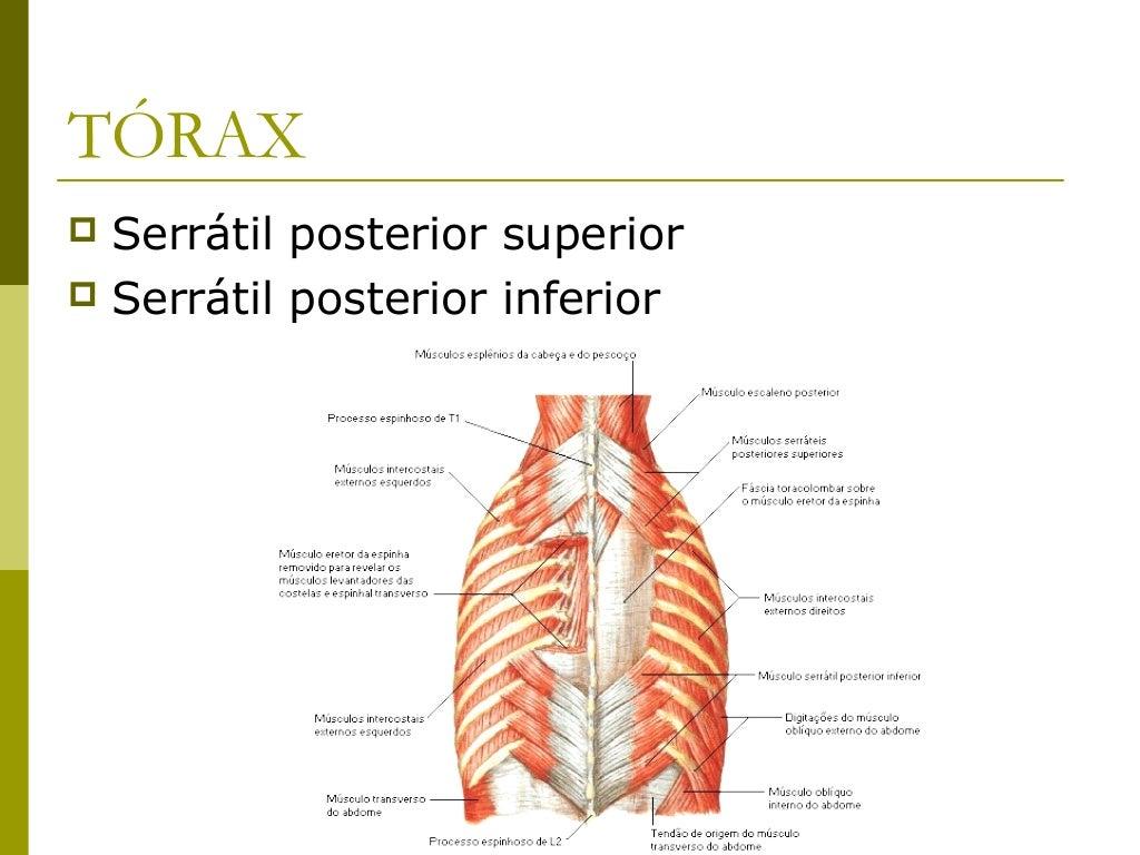 Região abdominalFace posterior