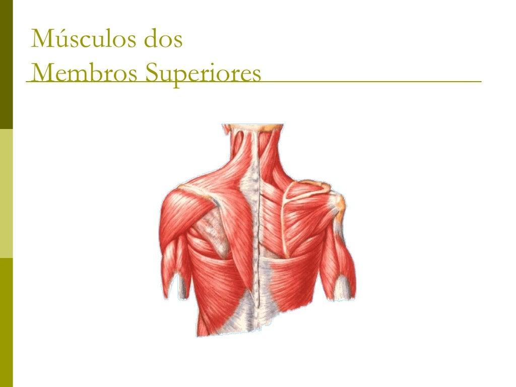 Rombóide Divide-se em duas porções anatômicas: Rombóide maior         Que se origina dos  processos espinhosos 2ª a 5ª v...