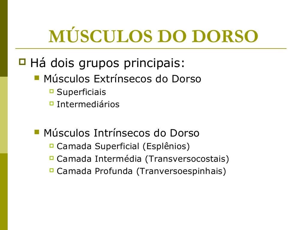 MÚSCULOS DO DORSO   Há dois grupos principais:       Músculos Extrínsecos do Dorso          Superficiais          Inte...