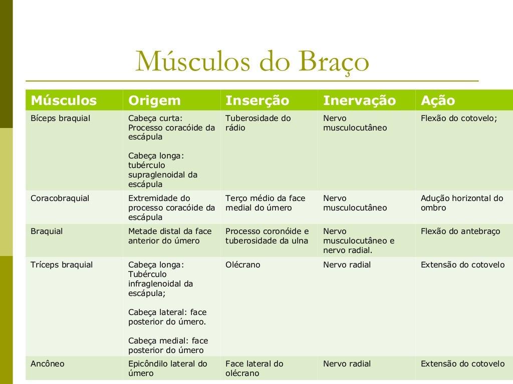 Músculos do Antebraço                  - Compartimento Posterior -Músculo                 Origem                  Inserção...