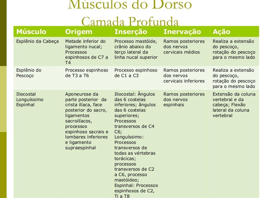 Músculos do Dorso                            Camada ProfundaMúsculo              Origem                Inserção           ...