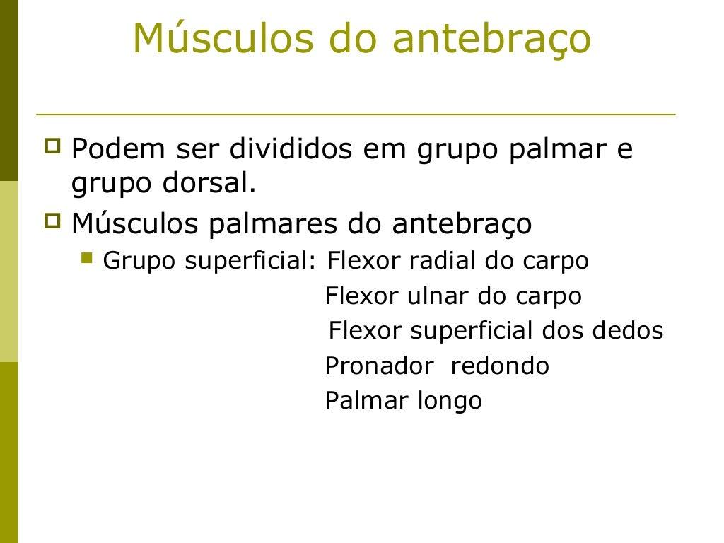Músculos do antebraço Podem ser divididos em grupo palmar e  grupo dorsal. Músculos palmares do antebraço       Grupo s...