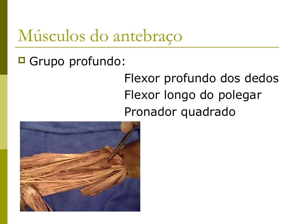 Músculos do Antebraço                   - Compartimento Anterior -Músculo              Origem              Inserção       ...