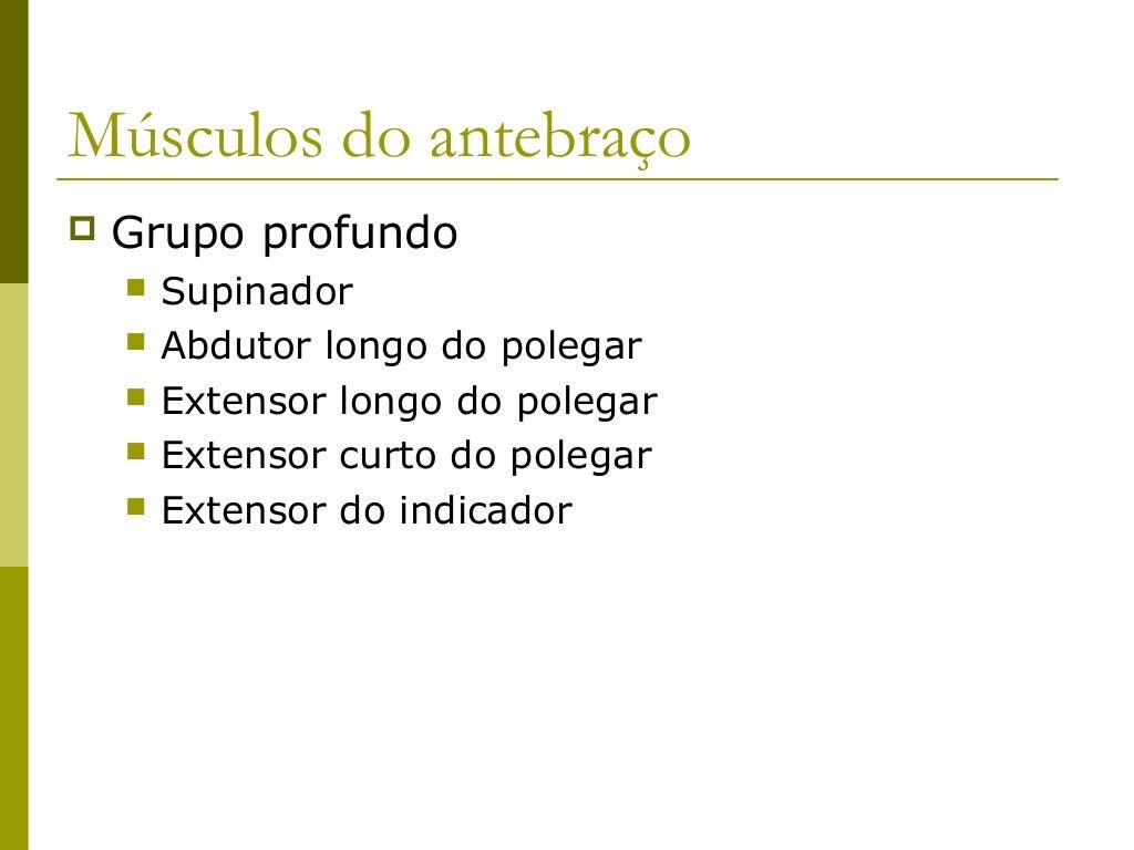 Músculos do Antebraço              - Compartimento Posterior -Músculo             Origem                 Inserção         ...