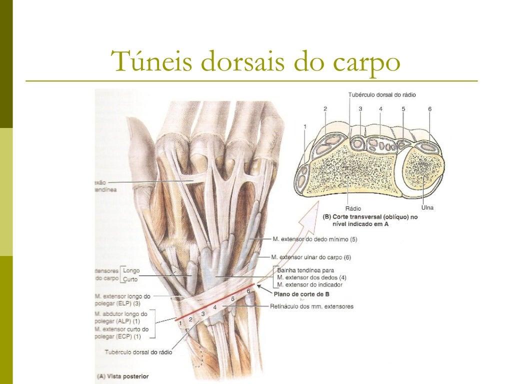 Músculos da MãoMúsculo                Origem             Inserção              Inervação          AçãoMúsculos hipotenares...