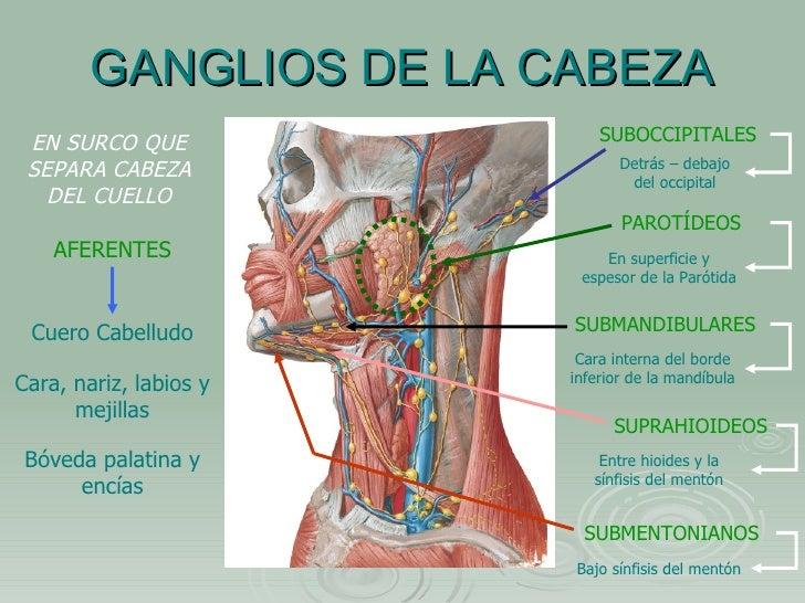 Los dolores en la espalda y el cuello después de spinalnoy las anestesias