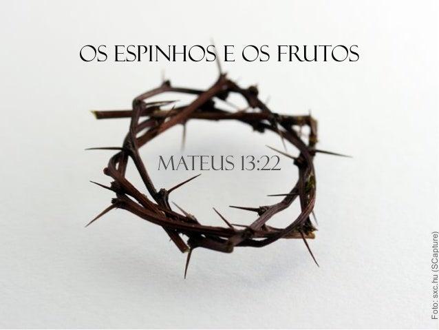Mateus 13:22 Os espinhos e os frutos Foto:sxc.hu(SCapture)