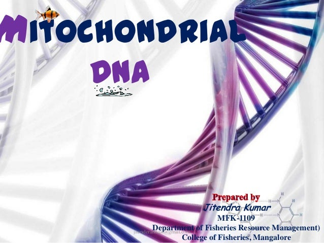 Mitochondrial DNA  Jitendra Kumar MFK-1109 Department of Fisheries Resource Management) jitenderanduat@gmail.com College o...