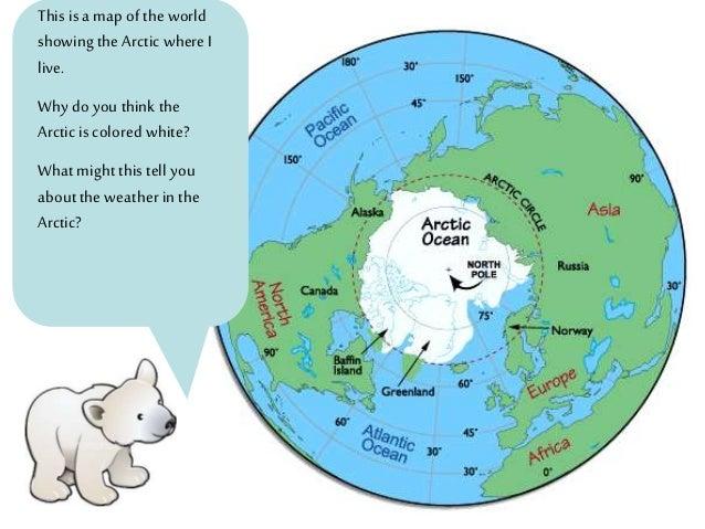 Polar Bear on emaze