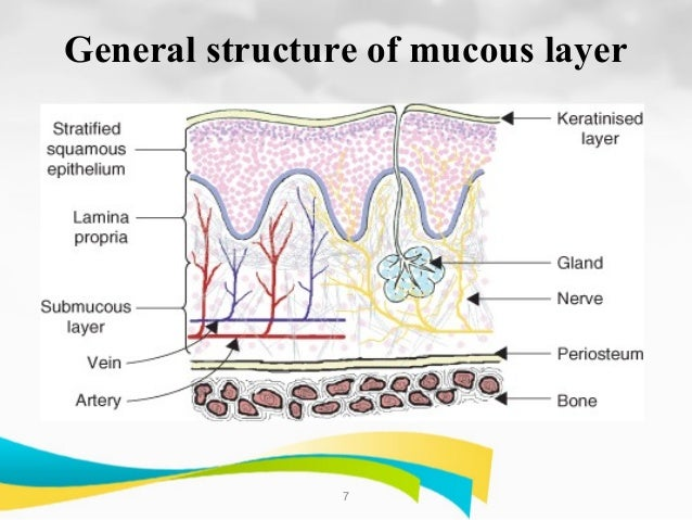 general function of epithelial tissue Epithelial tissue characteristics study general features • identification and functions of connective tissues involves at least three characteristics.
