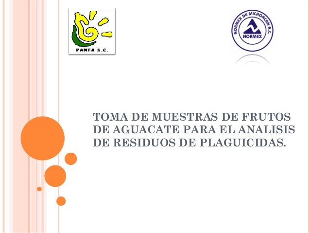 TOMA DE MUESTRAS DE FRUTOS DE AGUACATE PARA EL ANALISIS DE RESIDUOS DE PLAGUICIDAS.