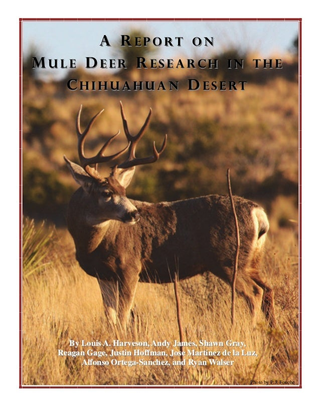 Report on Mule Deer Research in the Chihuahuan Desert