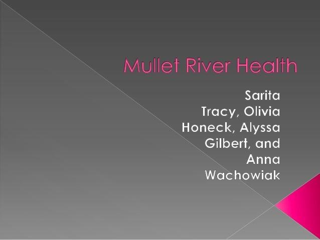 Mullet river health project olivia honeck