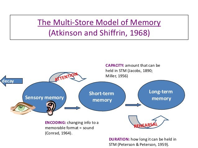 iconic and echoic memory essay Iconic memory is the visual papers edit acosta, e m, naatanen, r, & ilmoniemi, r j (1999) temporal span of human echoic memory and mismatch.