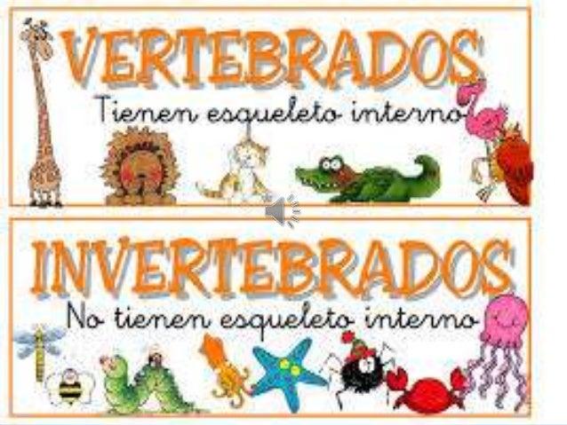 ¿ Quienes Son Los Invertebrados ?