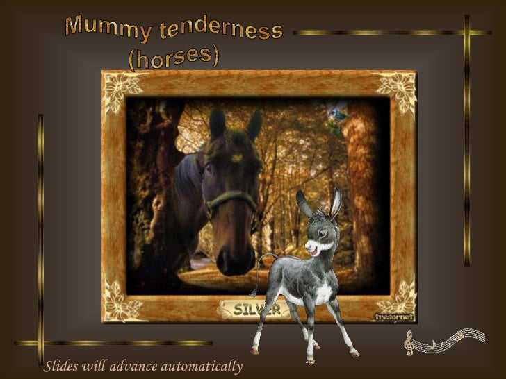 Mummy tenderness (horses)