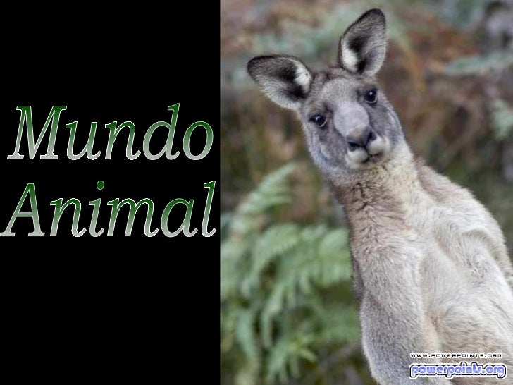 Mundo animal 1730