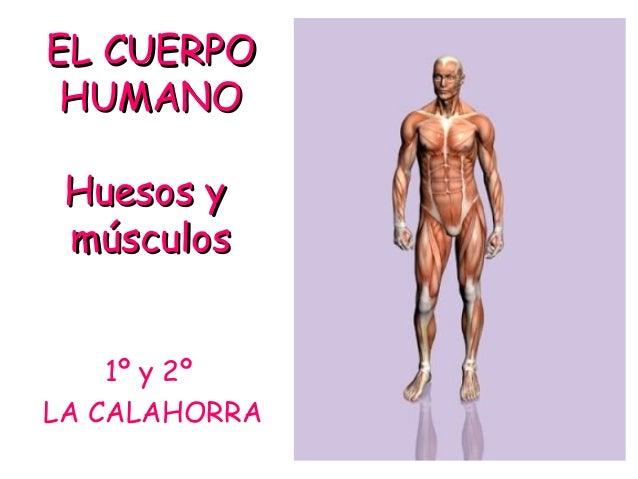 EL CUERPOEL CUERPO HUMANOHUMANO Huesos yHuesos y músculosmúsculos 1º y 2º LA CALAHORRA