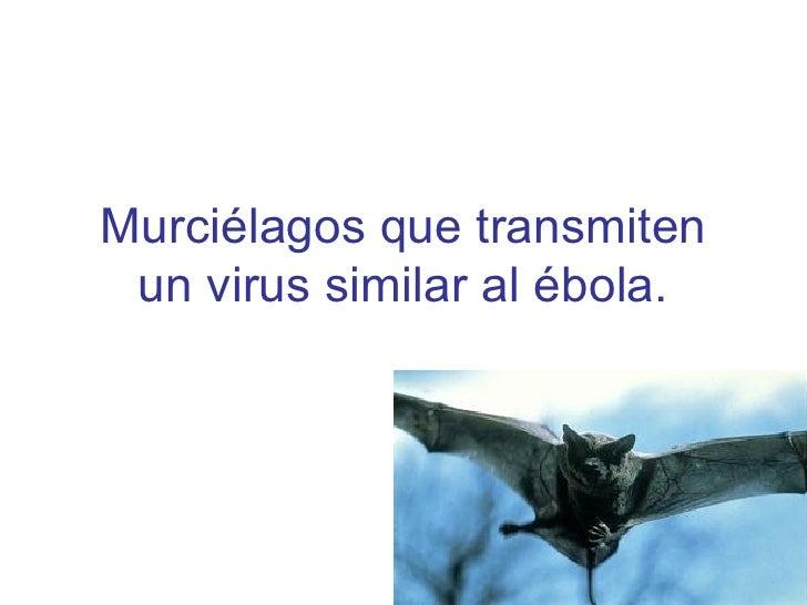 MurciéLagos Que Transmiten Un Virus Similar Al éBola
