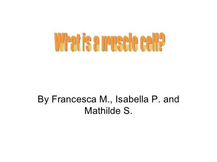 By Francesca M., Isabella P. and Mathilde S. What is a muscle cell?