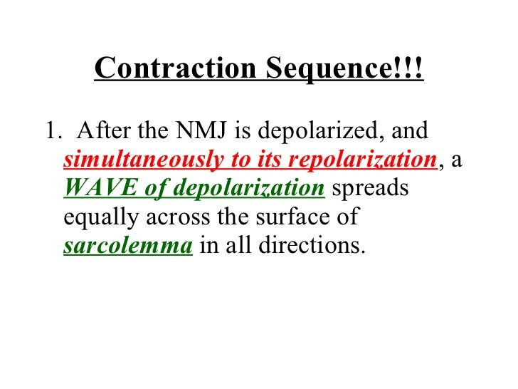 Contraction Sequence!!! <ul><li>1.  After the NMJ is depolarized, and  simultaneously to its repolarization , a  WAVE of d...