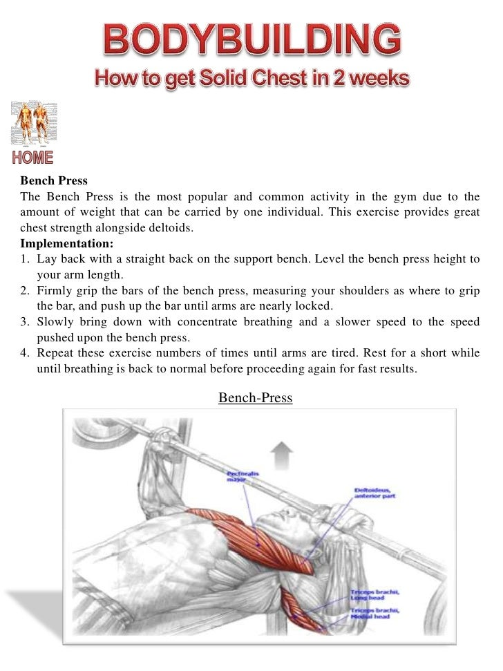 Back pull up muscles worked pictures to pin on pinterest for Plank muscles worked diagram