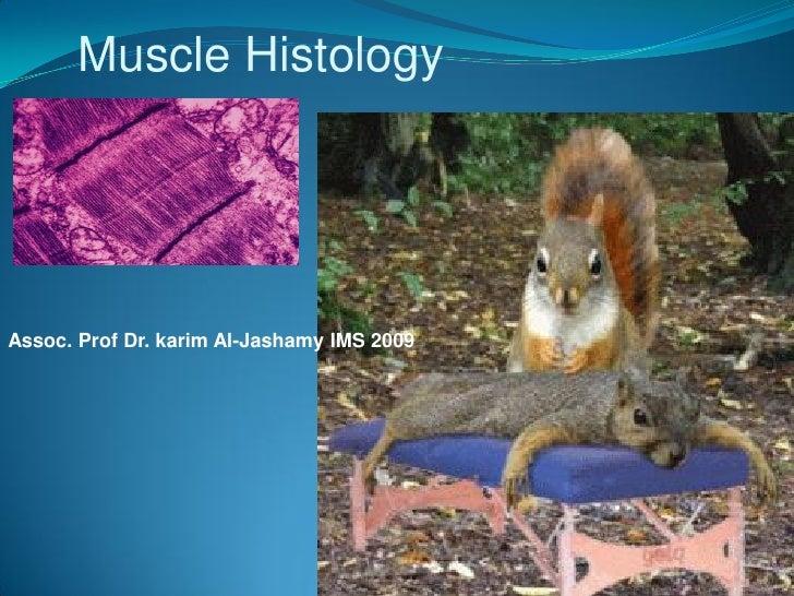 Muscle Histology     Assoc. Prof Dr. karim Al-Jashamy IMS 2009