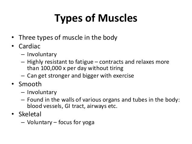 Three Types of Bodies Types of Muscles• Three Types