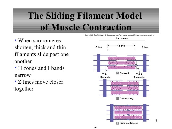 Sliding Filament Model Of Muscle Contraction. Email Hosting Solutions Bond Yield Calculator. Wireless Control Lighting Mutual Fund Results. Newspaper Distribution Services. Assisted Living Facilities Chicago. Masters In Healthcare Administration Nyc. Interlock Roofing Prices Covent Hotel Chicago. Cerebral Palsy Communication What Is A R N. Nec Phone System Manual Milliken Walk Off Mats