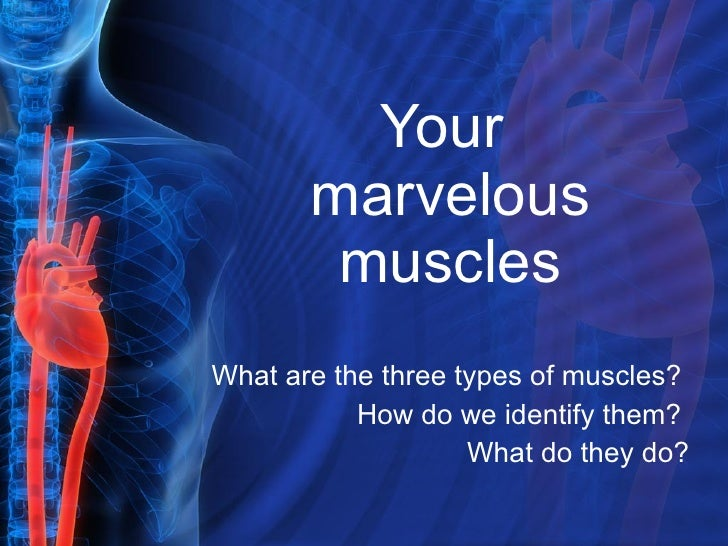 Your  marvelous muscles What are the three types of muscles?  How do we identify them?  What do they do?