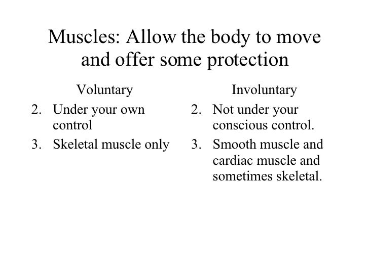 Muscles: Allow the body to move and offer some protection <ul><li>Voluntary </li></ul><ul><li>Under your own control </li>...