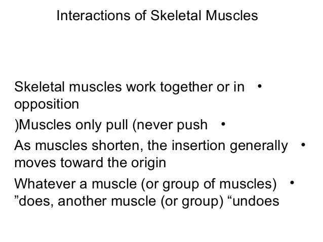 Interactions of Skeletal Muscles •Skeletal muscles work together or in opposition •Muscles only pull (never push( •As musc...
