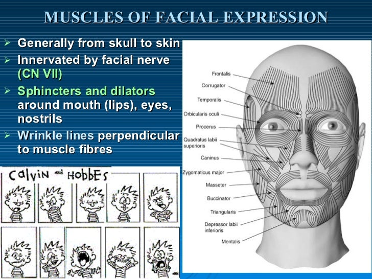 Facial muscle points